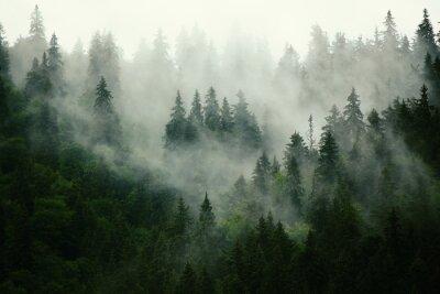 Papier peint  Paysage brumeux avec forêt de sapin dans le style rétro vintage hipster